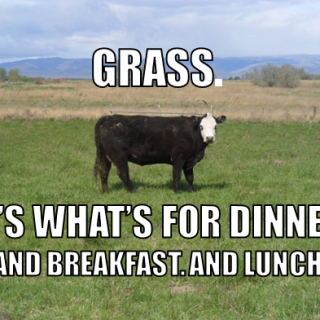 Why Grass Fed?… and a recipe for burgers
