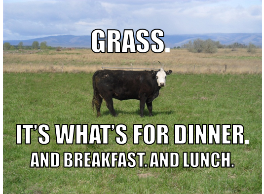 grass-its-what-for-dinner