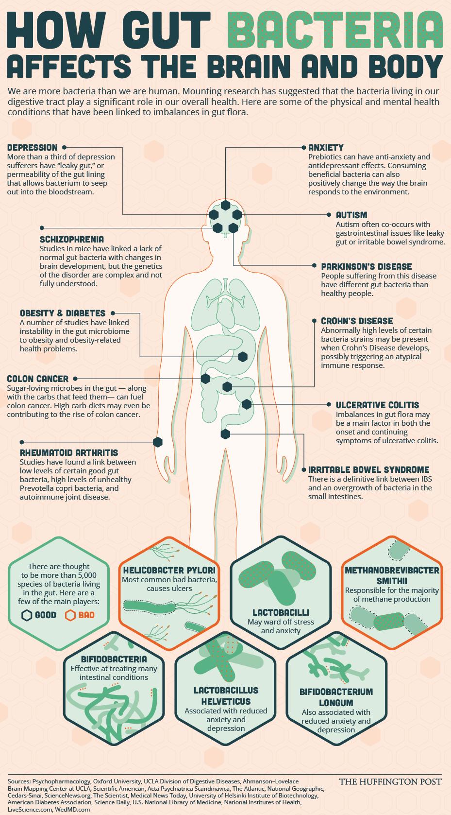 Watch Good Gut Health: The Beginners Guide video